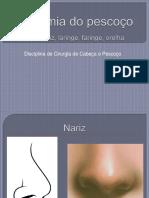 Anatomia Completo Pescoço