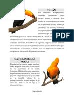 Trabajo • Tipos de Aves