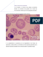Informe 5 de Biologia