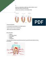 Ligamento Periodontal Mmmmm
