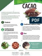 Cacao Monograf A