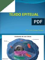 epitelial