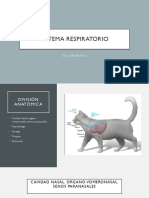 sistema respiratorio .pdf