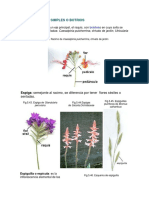 inflorecencia 2.docx