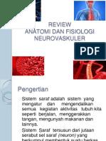 review anfis neorovaskular