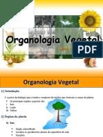 Aula Biologia Juber - Organologia Vegetal[1]