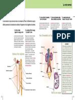06_formationdelurine (1)