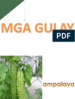 MGA-GULAY