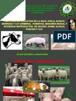 eficiencia reproductiva de animales domesticos.