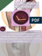 Cs016 huesos músculos y articulaciones 150107220020 Conversion Gate01