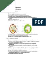 Atividade 1 - Fundamentos de Bioquímica.docx