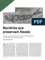 Bactérias Que Preservam Fósseis - 2017
