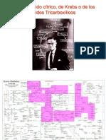 Krebs Rocio2018.pdf