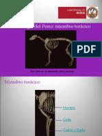 Miembro-toracico ARP.pps