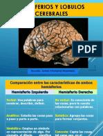 Neurofisiologia 6