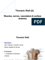 Anatomy, Lecture 4, Thoracic Wall (2) [Slides]