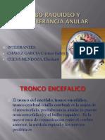 Bulbo Raquideo Anatomia Expo