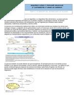 Apuntes Tema 5- Alteraciones Del Metabolismo de Los Glúcidos