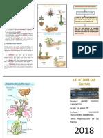 Reproducción de las Plantas.docx