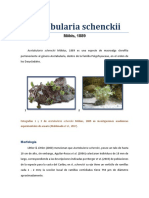 Acetabularia schenckii