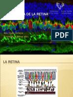 Embriología de la Retina
