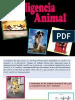 106578240 Inteligencia Animal