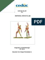 Taller 2 Sistema Muscular