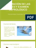 seminario 2 parasitologia