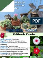 Manual Básico Cultivo Orquídeas