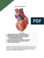 como funciona el corazon