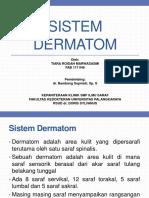 dermatom 2