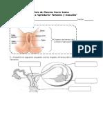 Guía-de-estudio-sistemas-reproductores-6º-ok-1