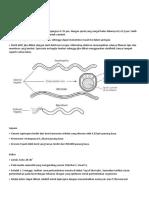 Struktur Bakteri Leptospira