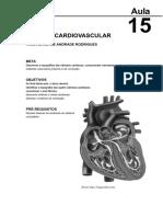 16223115102012Elementos_de_Anatomia_Humana_Aula_15.pdf