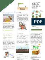 Ciclo de Vida de La Planta - Sebastian