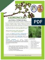 Cedroncillo Version Final 21.12.17