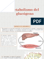 18. Metabolismo Del Glucogeno - Copia