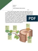 Guía tejidos vegetales