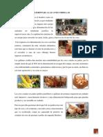Alimentar a Las Aves Criollas
