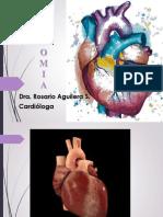 Anatomia Ucebol