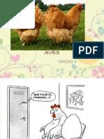 AVES DE IMPORTANCIA.pptx