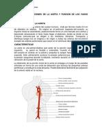 Tarea 1 Bufircaciones de La Aorta y Funcion de Los Vasos Linfaticos