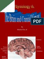 Otak Dan Nn Cranialis