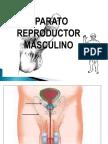 Aparato Reproductor Masculino 1