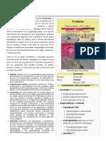 Protista.pdf