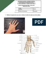 Previo-2-Anatomia-labo.docx