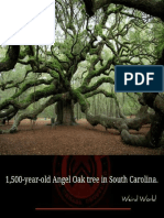 rarest photographs-1.pdf