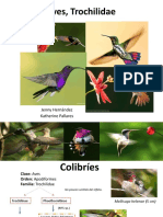 Aves- colibris -Trochilidae.pptx