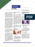 OFTALMOLOGIA VETERINARIA.pdf