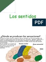 lossentidos2.ppt